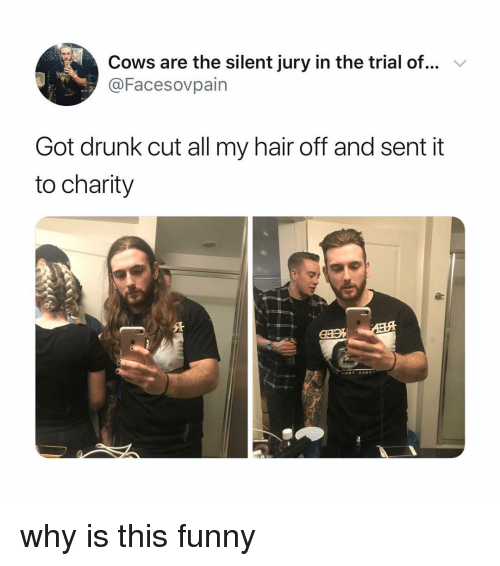 Drunk, Funny, and Hair: Cows are the silent jury in the trial of..v  @Facesovpain  Got drunk cut all my hair off and sent it  to charity why is this funny