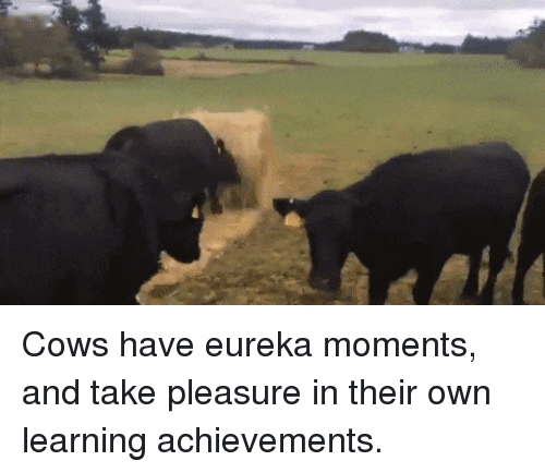 Eureka, Own, and Pleasure: Cows have eureka moments, and take pleasure in their own learning achievements.
