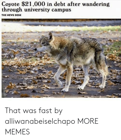 Dank, Memes, and News: Coyote $21.000 in debt after wandering  through university campus  THE NEWS DESK That was fast by alliwanabeiselchapo MORE MEMES