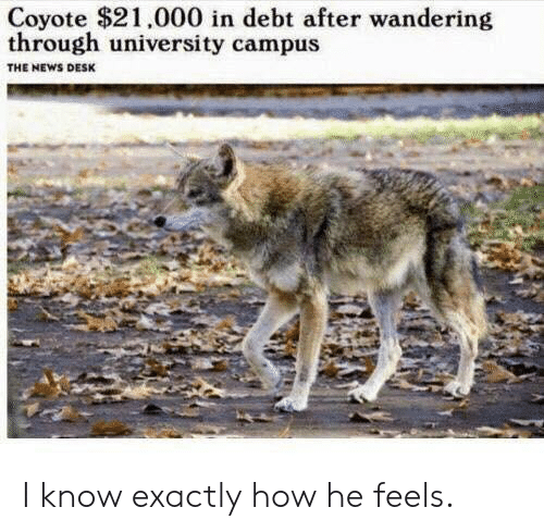 News, Coyote, and Desk: Coyote $21,000 in debt after wandering  through university campus  THE NEWS DESK I know exactly how he feels.