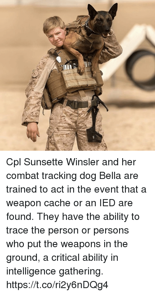Memes, Cache, and Ability: Cpl Sunsette Winsler and her combat tracking dog Bella are trained to act in the event that a weapon cache or an IED are found. They have the ability to trace the person or persons who put the weapons in the ground, a critical ability in intelligence gathering. https://t.co/ri2y6nDQg4
