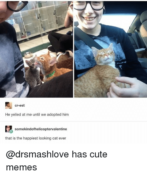 cute memes: cr-est  He yelled at me until we adopted him  somekindofhelicoptervalentine  that is the happiest looking cat ever @drsmashlove has cute memes