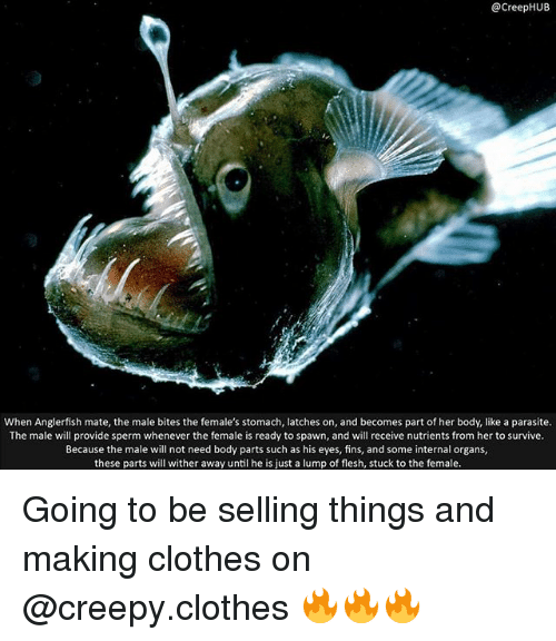 Clothes, Creepy, and Memes: @CreepHUIB  When Anglerfish mate, the male bites the female's stomach, latches on, and becomes part of her body, like a parasite.  The male will provide sperm whenever the female is ready to spawn, and will receive nutrients from her to survive.  Because the male will not need body parts such as his eyes, fins, and some internal organs,  these parts will wither away until he is just a lump of flesh, stuck to the female. Going to be selling things and making clothes on @creepy.clothes 🔥🔥🔥