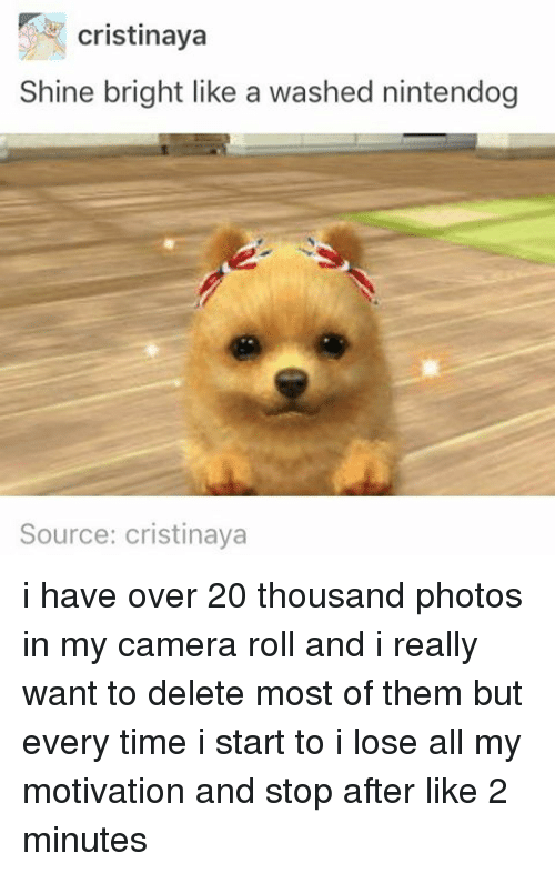 nintendogs: cristinaya  Shine bright like a washed nintendog  Source: cristinaya i have over 20 thousand photos in my camera roll and i really want to delete most of them but every time i start to i lose all my motivation and stop after like 2 minutes