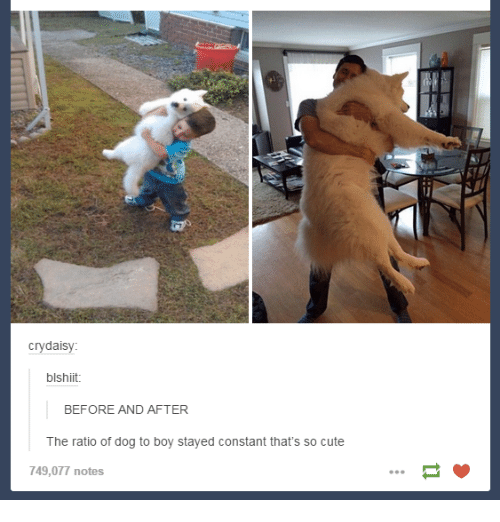 The Ratio: cry daisy:  blshiit.  BEFORE AND AFTER  The ratio of dog to boy stayed constant that's so cute  749,077 notes