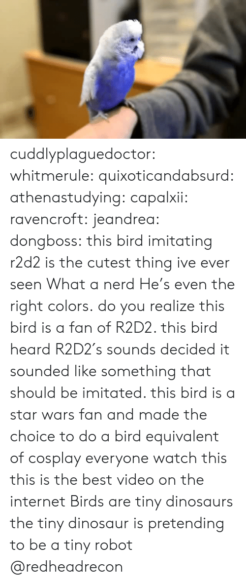 Best Video: cuddlyplaguedoctor:  whitmerule:  quixoticandabsurd:  athenastudying:  capalxii:  ravencroft:  jeandrea:  dongboss:  this bird imitating r2d2 is the cutest thing ive ever seen  What a nerd  He's even the right colors.  do you realize this bird is a fan of R2D2. this bird heard R2D2′s sounds  decided it sounded like something that should be imitated. this bird is a star wars fan and made the choice to do a bird equivalent of cosplay   everyone watch this this is the best video on the internet    Birds are tiny dinosaurs   the tiny dinosaur is pretending to be a tiny robot  @redheadrecon