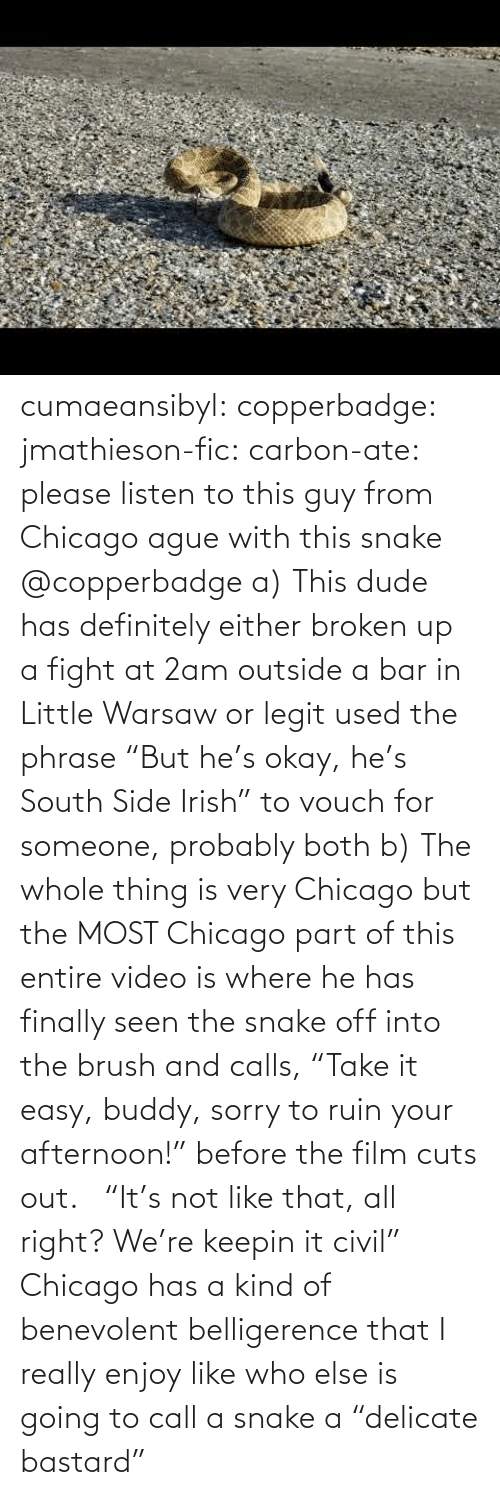 "From: cumaeansibyl: copperbadge:  jmathieson-fic:  carbon-ate: please listen to this guy from Chicago ague with this snake @copperbadge  a) This dude has definitely either broken up a fight at 2am outside a bar in Little Warsaw or legit used the phrase ""But he's okay, he's South Side Irish"" to vouch for someone, probably both b) The whole thing is very Chicago but the MOST Chicago part of this entire video is where he has finally seen the snake off into the brush and calls, ""Take it easy, buddy, sorry to ruin your afternoon!"" before the film cuts out.    ""It's not like that, all right? We're keepin it civil"" Chicago has a kind of benevolent belligerence that I really enjoy like who else is going to call a snake a ""delicate bastard"""