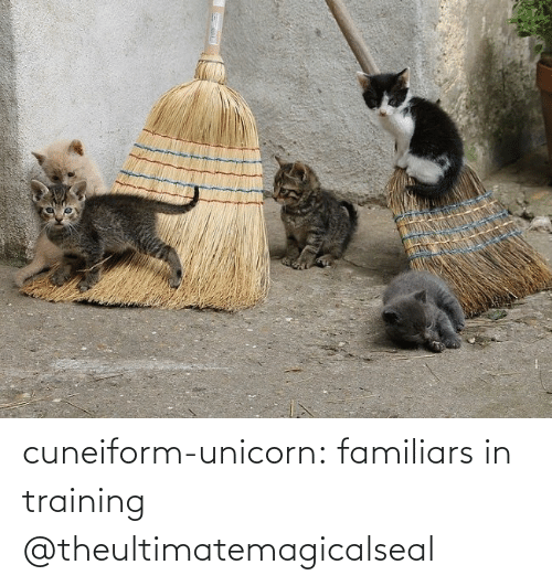 Unicorn: cuneiform-unicorn: familiars in training @theultimatemagicalseal