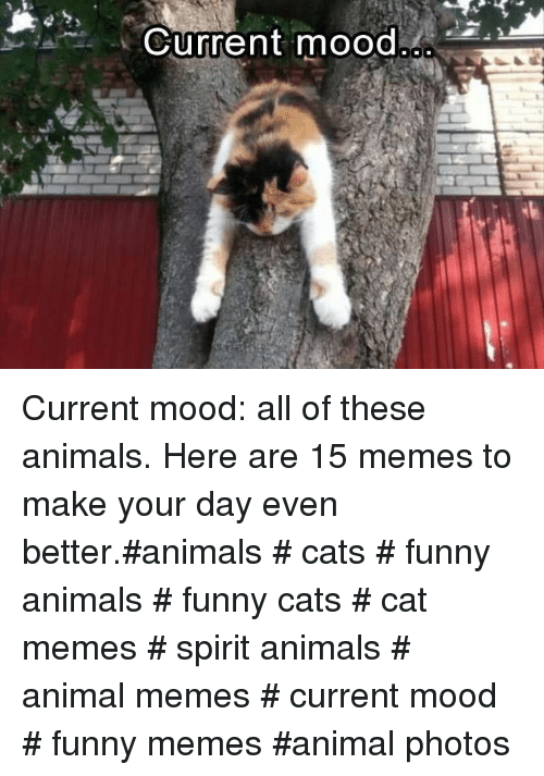 Animals, Cats, and Funny: Current mood Current mood: all of these animals.Here are 15 memes to make your day even better.#animals # cats # funny animals # funny cats # cat memes # spirit animals # animal memes # current mood # funny memes #animal photos