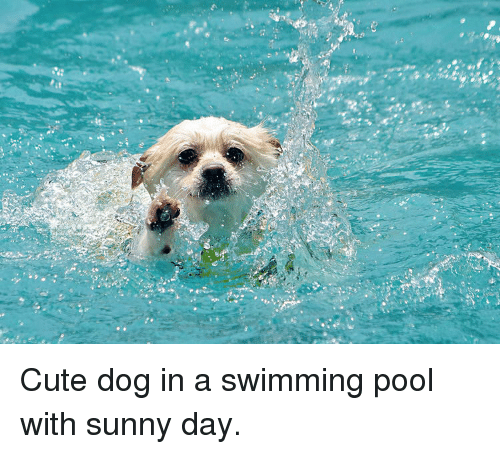 Cute, Pool, and Swimming: Cute dog in a swimming pool with sunny day.
