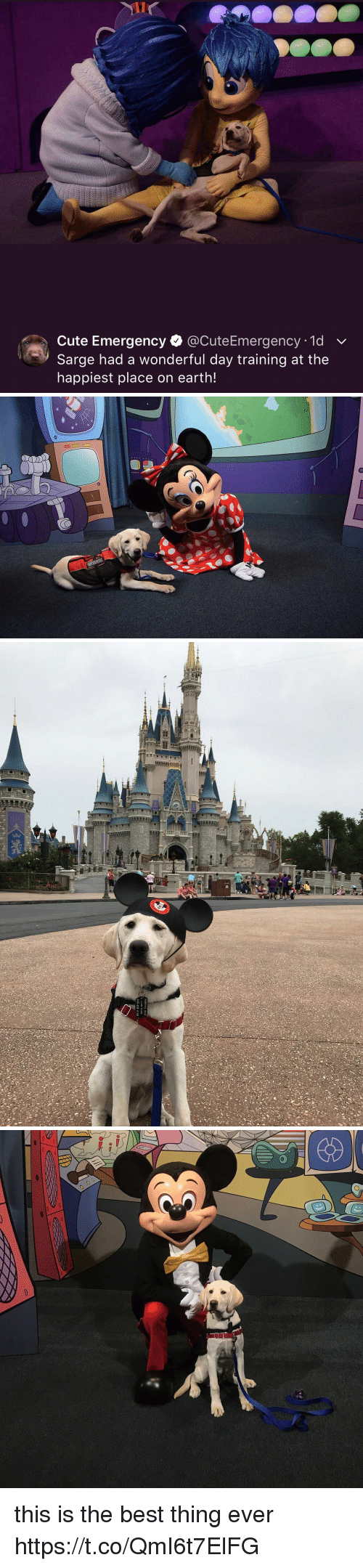 Cute, Best, and Earth: Cute Emergency. @CuteEmergency. 1d  Sarge had a wonderful day training at the  happiest place on earth! this is the best thing ever https://t.co/QmI6t7ElFG