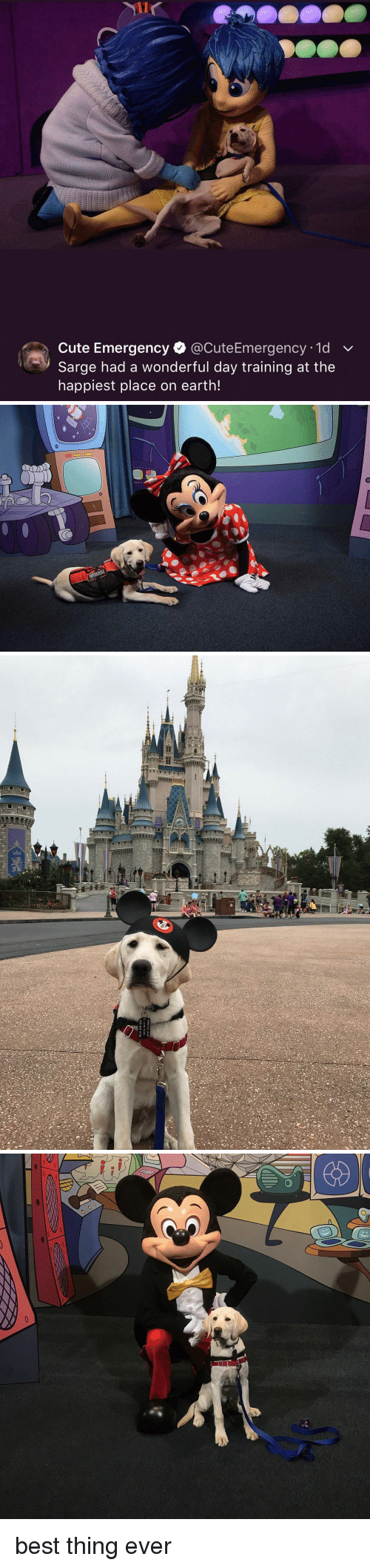 Cute Emergency: Cute Emergency @CuteEmergency 1d v  Sarge had a wonderful day training at the  happiest place on earth! <p>best thing ever</p>
