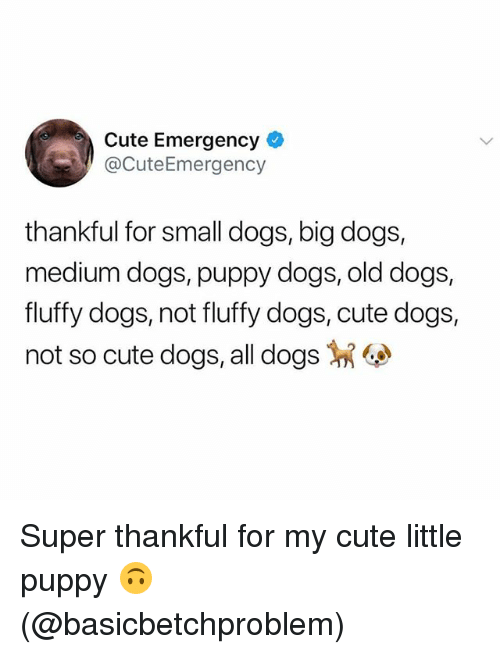 Cute, Dogs, and Memes: Cute Emergency  @CuteEmergency  thankful for small dogs, big dogs,  medium dogs, puppy dogs, old dogs,  fluffy dogs, not fluffy dogs, cute dogs,  not so cute dogs, all dogs Super thankful for my cute little puppy 🙃 (@basicbetchproblem)