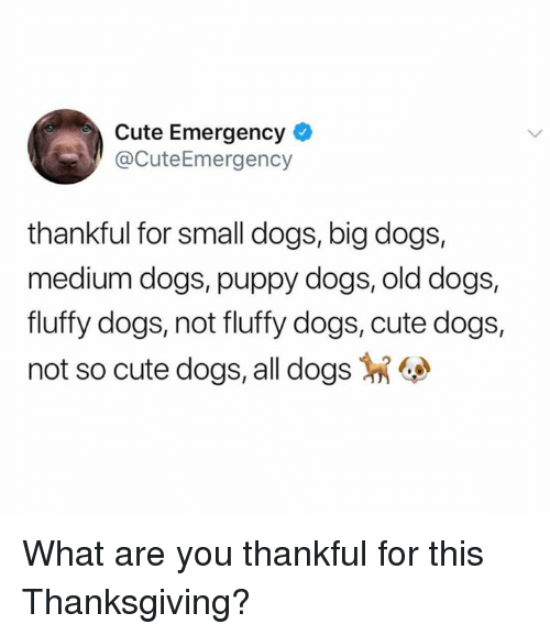 Cute, Dogs, and Memes: Cute Emergency  @CuteEmergency  thankful for small dogs, big dogs,  medium dogs, puppy dogs, old dogs,  fluffy dogs, not fluffy dogs, cute dogs,  not so cute dogs, all dogs What are you thankful for this Thanksgiving?