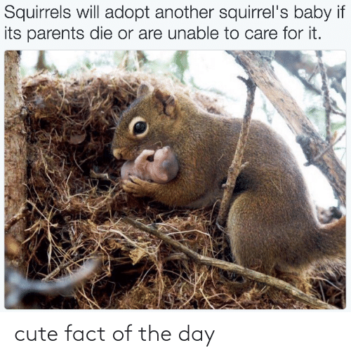 fact: cute fact of the day