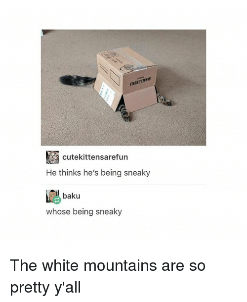 Tumblr, White, and Baku: cutekittensarefun  He thinks he's being sneaky  baku  whose being sneaky The white mountains are so pretty y'all