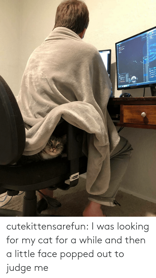 My Cat: cutekittensarefun: I was looking for my cat for a while and then a little face popped out to judge me