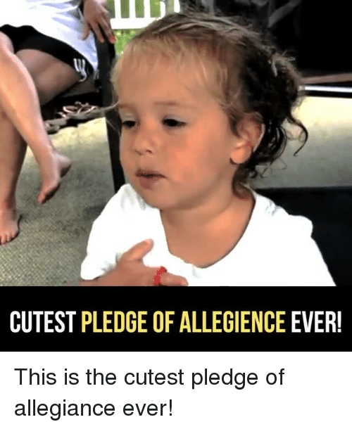 Memes, Pledge of Allegiance, and 🤖: CUTEST PLEDGE OF ALLEGIENCE EVER! This is the cutest pledge of allegiance ever!