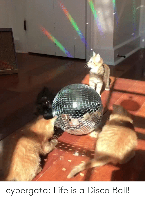 Https: cybergata: Life is a Disco Ball!