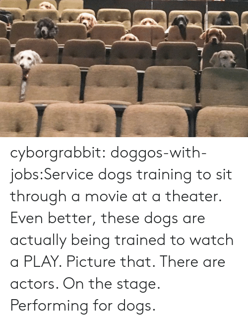 Dogs, Tumblr, and Blog: cyborgrabbit:  doggos-with-jobs:Service dogs training to sit through a movie at a theater.  Even better, these dogs are actually being trained to watch a PLAY. Picture that. There are actors. On the stage. Performing for dogs.