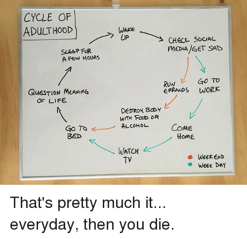 Life, Memes, and Run: CYCLE OF  ADULTHOOD  WAKE  UP  CHeCE SOCIAL  SLeeP FoR  A Few HoURS  RUN GO TO  ERRANPS WORK  QuESTION MEANING  OF LIFE  DESTROY BCDY  WITH FocD DR  coHoL  COME  tome  BED  WATCH  TV  ·WEEKEND  WEEKDAY That's pretty much it... everyday, then you die.