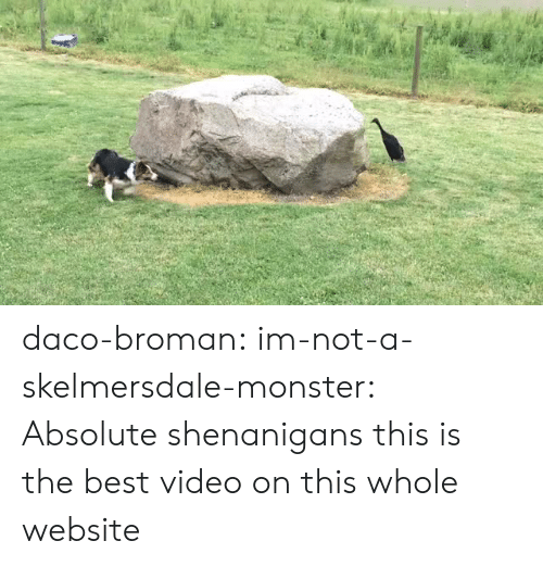Best Video: daco-broman: im-not-a-skelmersdale-monster:  Absolute shenanigans   this is the best video on this whole website