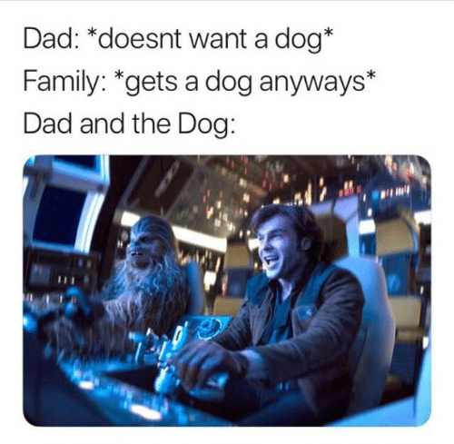 Dad, Family, and Star Wars: Dad: *doesnt want a dog*  Family: *gets a dog anyways*  Dad and the Dog: