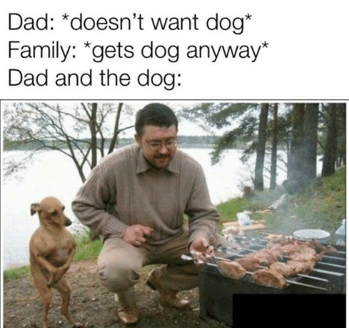 Dad, Family, and Memes: Dad: *doesn't want dog*  Family: *gets dog anyway*  Dad and the dog: