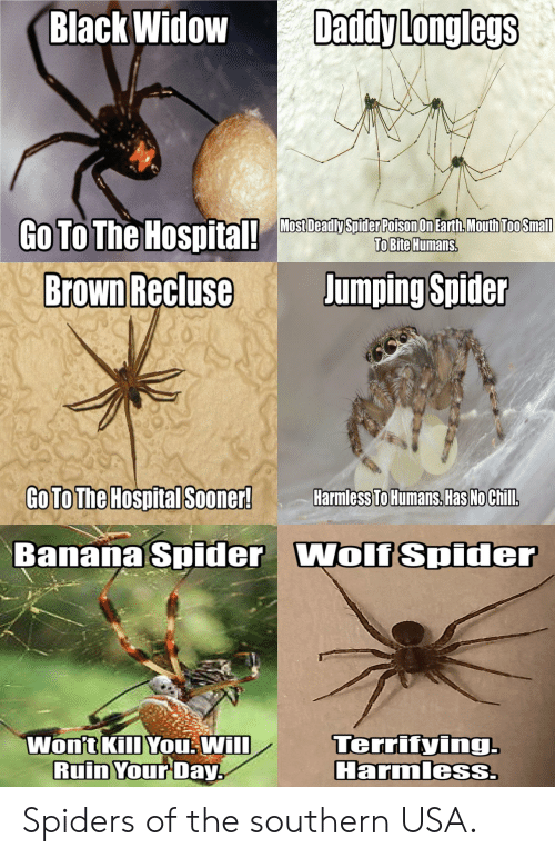 can black widow spiders kill you - 500×772