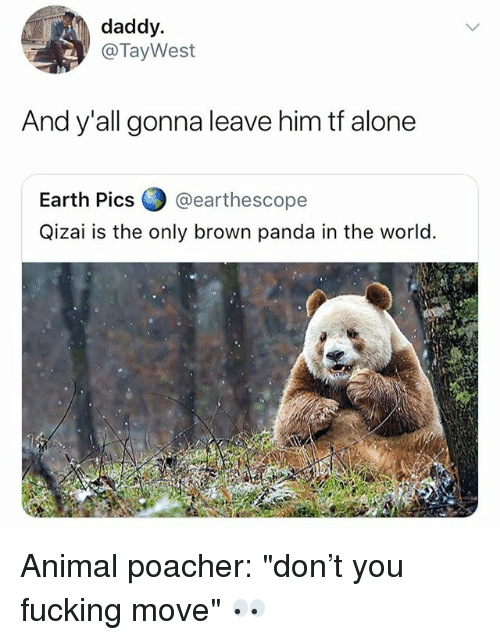 """Being Alone, Fucking, and Panda: daddy.  @TayWest  And y'all gonna leave him tf alone  Earth Pics @earthescope  Qizai is the only brown panda in the world. Animal poacher: """"don't you fucking move"""" 👀"""