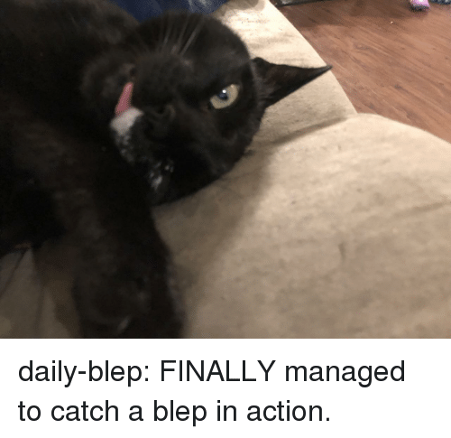 Tumblr, Blog, and Com: daily-blep:  FINALLY managed to catch a blep in action.