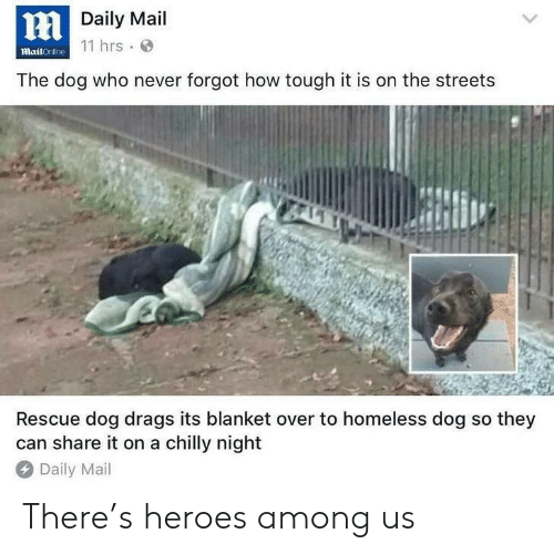 Homeless, Streets, and Daily Mail: Daily Mail  11 hrs  mailOnline  The dog who never forgot how tough it is on the streets  Rescue dog drags its blanket over to homeless dog so they  can share it on a chilly night  Daily Mail There's heroes among us