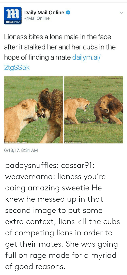 Africa, Tumblr, and Blog: Daily Mail Online  @MailOnline  MailOnline  Lioness bites a lone male in the face  after it stalked her and her cubs in the  hope of finding a mate dailym.ai/  2tgSS5k  Real Africa Cover Images  Africa Cover Images  6/13/17, 8:31 AM paddysnuffles: cassar91:  weavemama:  lioness you're doing amazing sweetie  He knew he messed up in that second image  to put some extra context, lions kill the cubs of competing lions in order to get theirmates. She was going full on rage mode for a myriad of good reasons.