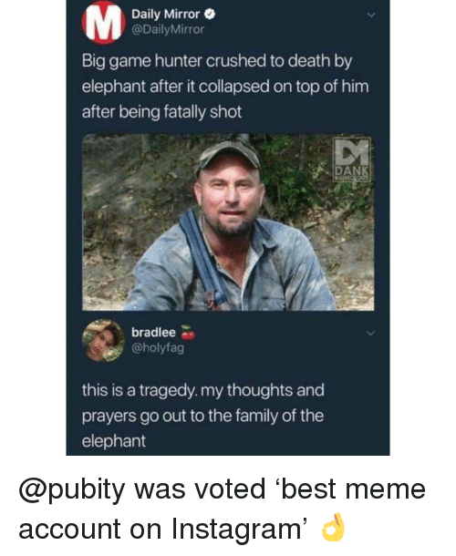 Family, Instagram, and Meme: Daily Mirror e  @DailyMirror  Lu  Big game hunter crushed to death by  elephant after it collapsed on top of him  after being fatally shot  DAN  bradlee  @holyfag  this is a tragedy. my thoughts and  prayers go out to the family of the  elephant @pubity was voted 'best meme account on Instagram' 👌