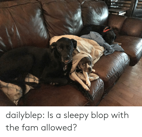 fam: dailyblep:  Is a sleepy blop with the fam allowed?