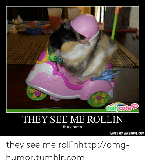 Rollin They Hatin: dailycute  net  THEY SEE ME ROLLIN  they hatin  TASTE OF AWESOME.COM they see me rollinhttp://omg-humor.tumblr.com