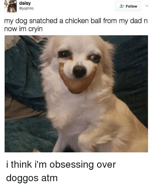 Dad, Memes, and Chicken: daisy  @yojihito  Follow  my dog snatched a chicken ball from my dad n  now im cryin i think i'm obsessing over doggos atm