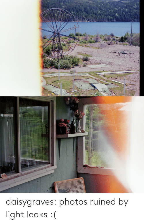 Tumblr, Blog, and Http: daisygraves: photos ruined by light leaks :(
