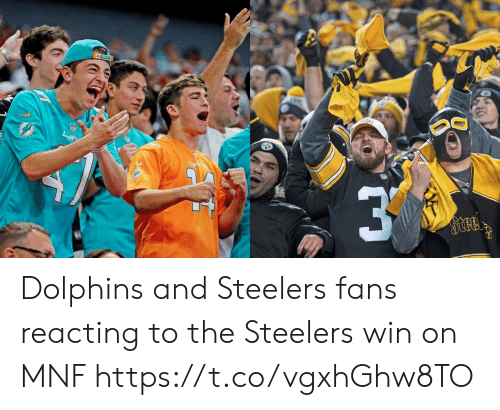 Football, Nfl, and Sports: Dal  Steel Dolphins and Steelers fans reacting to the Steelers win on MNF https://t.co/vgxhGhw8TO
