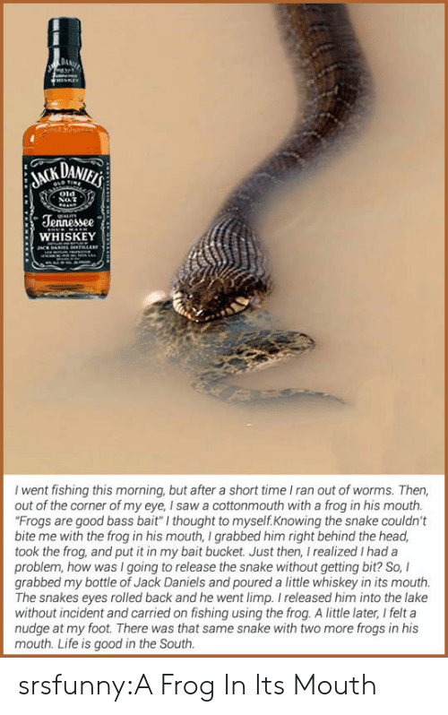 """Nudge: DAMAİ  Jennessee  WHISKEY  I went fishing this morning, but after a short time I ran out of worms. Then,  out of the corner of my eye, I saw a cottonmouth with a frog in his mouth.  Frogs are good bass bait"""" I thought to myself.Knowing the snake couldn't  bite me with the frog in his mouth, I grabbed him right behind the head,  took the frog, and put it in my bait bucket. Just then, I realized I had a  problem, how was I going to release the snake without getting bit? So, I  grabbed my bottle of Jack Daniels and poured a little whiskey in its mouth.  The snakes eyes rolled back and he went limp. I released him into the lake  without incident and carried on fishing using the frog. A little later, I felt a  nudge at my foot. There was that same snake with two more frogs in his  mouth. Life is good in the South srsfunny:A Frog In Its Mouth"""