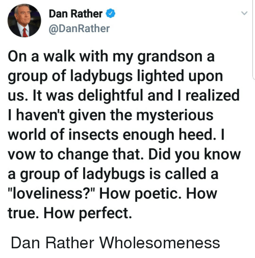 "True, World, and Poetic: Dan Rather  @DanRather  On a walk with my grandson a  group of ladybugs lighted upon  us. It was delightful and I realized  I haven't given the mysteriou:s  world of insects enough heed. I  vow to change that. Did you know  a group of ladybugs is called  ""loveliness?"" How poetic. How  true. How perfect. Dan Rather Wholesomeness"
