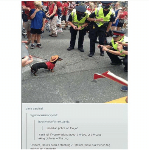 "Ironic, Police, and Pictures: dana-cardinal  mypatronusisrorypond  theonlyhopeformeisbands  Canadian police on the job.  I can't tell if you're talking about the dog, or the cops  taking pictures of the dog  ""Officers, there's been a stabbing-'-Ma'am, there is a wiener dog  dressed as a mountie"