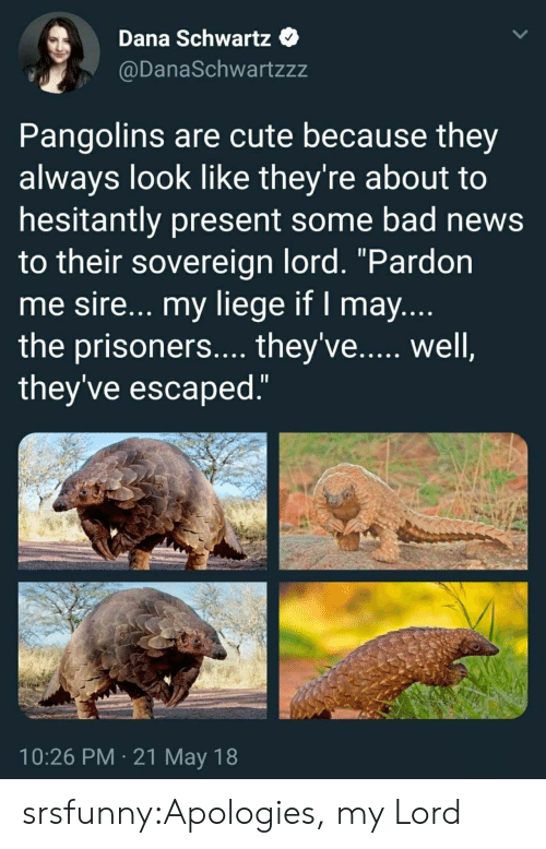"Bad, Cute, and News: Dana Schwartz  @DanaSchwartzzz  Pangolins are cute because they  always look like they're about to  hesitantly present some bad news  to their sovereign lord. ""Pardon  me sire... my liege if I may  the prisoners.... they've...., well  they've escaped  10:26 PM 21 May 18 srsfunny:Apologies, my Lord"