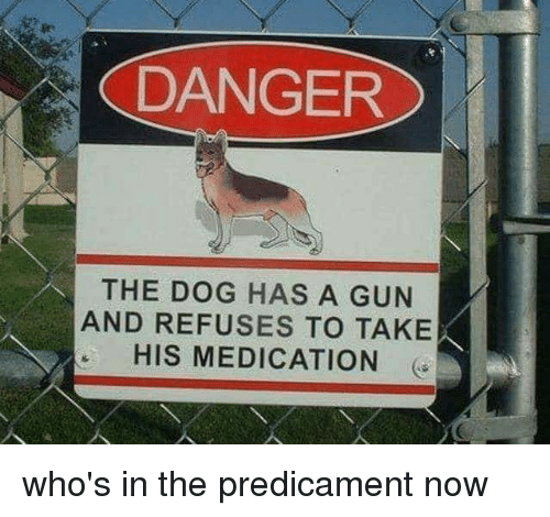 Gun, Dog, and Now: DANGER  THE DOG HAS A GUN  AND REFUSES TO TAKE  HIS MEDICATION who's in the predicament now