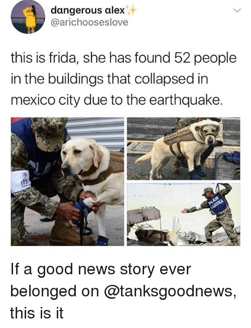 Funny, News, and Earthquake: dangerous alex  @arichooseslove  this is frida, she has found 52 people  in the buildings that collapsed in  mexico city due to the earthquake. If a good news story ever belonged on @tanksgoodnews, this is it