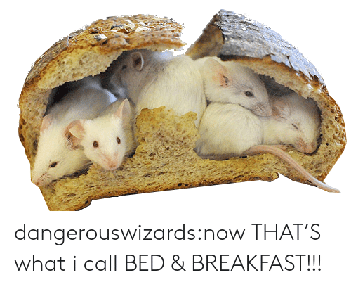Tumblr, Blog, and Breakfast: dangerouswizards:now THAT'S what i call BED & BREAKFAST!!!
