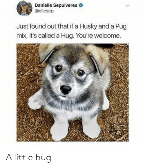 Husky, Pug, and Hug: Danielle Sepulveres  @ellesep  Just found out that if a Husky and a Pug  mix, it's called a Hug. You're welcome. A little hug