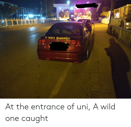 Wild, Uni, and One: DANS KUR  TNNY MAGNET At the entrance of uni, A wild one caught