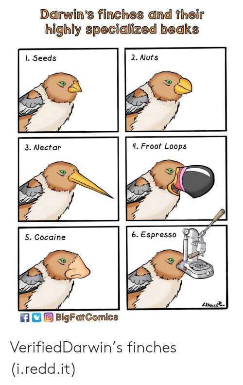 Cocaine, Espresso, and Redd: Darwin's finches and their  highly specialized beaks  l. Seeds  2. Nuts  3. Nectar  4. Froot Loops  5. Cocaine  6. Espresso  BigFatComics VerifiedDarwin's finches (i.redd.it)
