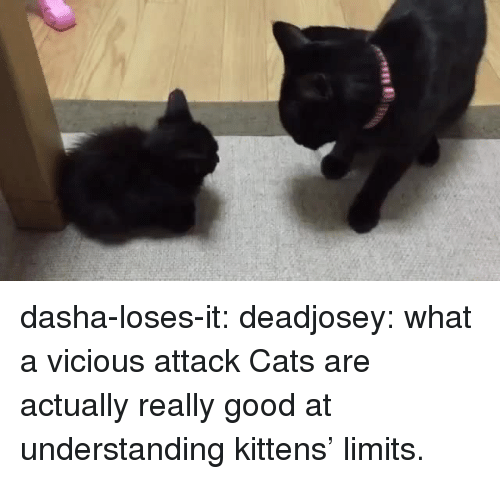 Cats, Tumblr, and Blog: dasha-loses-it:  deadjosey: what a vicious attack  Cats are actually really good at understanding kittens' limits.